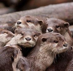 Furry family.