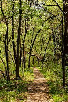 Wesselman Woods Nature Preserve (Indiana) #path #indiana