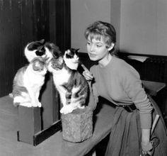 Brigitte Bardot and four cats