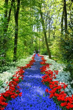 Path of Flowers at Keukenhof in Lisse, the Netherlands