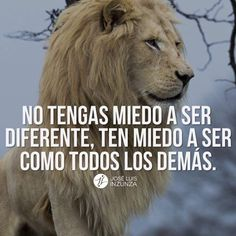 Spanish Inspirational Quotes, Spanish Quotes, Business Motivation, Life Motivation, Mi Images, Lion Quotes, Yoga Mantras, Tumblr Love, Gods Not Dead