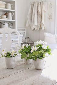 """Hvitveis er bare SÅ veldig vakkert både på kjøkkenbordet og ute i naturen hvor det danner seg """"tepper""""av denne nydelige vårblomsten :) Fo..."""