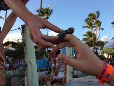 Nascimento das tortugas . Projeto Tamar- praia do Forte - Bahia