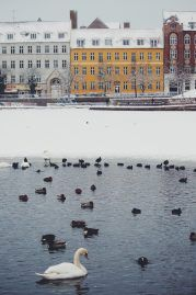 Reasons to Come to Copenhagen in the Winter   Oregon Girl Around the World  #Hygge #Cozy #Cafes #CoffeeCulture #Museums #Sledding #IceSkating #Charm #Copenhagen #HotChocolate