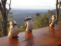 Kookaburras at The  Polish Place Restaurant, Qld, Australia