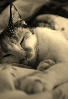 """No amount of time can erase the memory of a good cat."" --Leo Dworken"