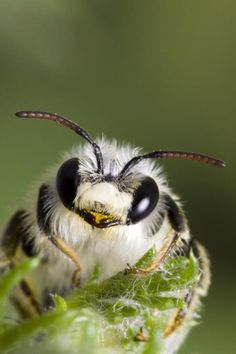 Bees' hairy bodies help them collect more pollen.