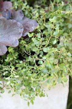 DIY Outdoor Planter: Rich Fall Hues