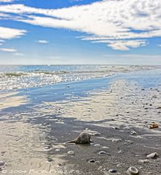 Shell collecting in Sanibel Island, Florida