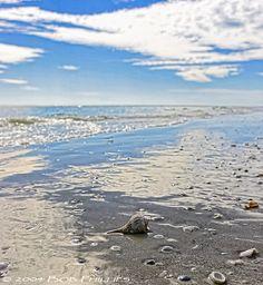 Shell collecting in Sanibel Island, Florida