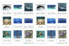 Montessori Ocean Animals 3-Part Cards
