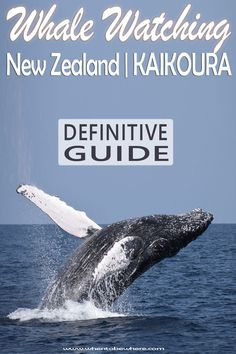 Whale Watching in New Zealand - Kaikoura: Top Tips, cruise tips, boat tours. Best time for whale watching: Winter, spring, summer, fall. View our full guide before you visit. #whalewatching #newzealand #kaikoura