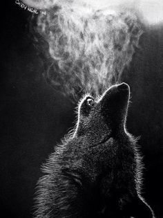 Charcoal Drawings Of Wolves Lobos on pinterest wolves, white wolves and arctic wolf