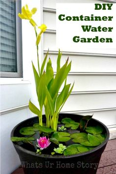 Easy how-to for making your own container water garden