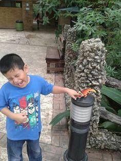 Leo y el cocodrilo