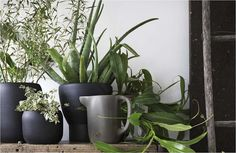 Aside from dinnerware, the new collection  from IKEA also includes earthenware pots ($13-$15) that are waterproof.