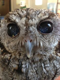 This is Zeus. He might be from space. No one's sure. | See The Universe In This Owl's Amazing Eyes