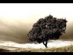 Alberto Cortez - Mi árbol y yo