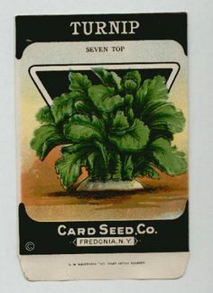 Antique Card Seed Company  Turnip