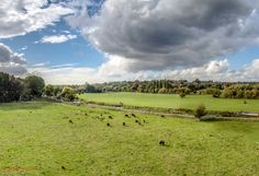 Kings Meads - View over the River Lea near Hertford