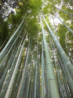 Forêt de Bambous à Arashiyama, Kyoto