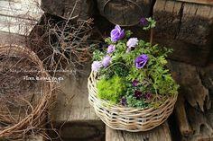 青いアネモネの寄せ植え の画像 フローラのガーデニング・園芸作業日記