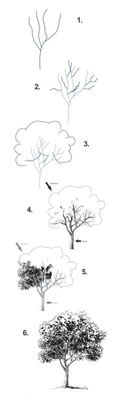 Draw a tree step by step - 9 Art Draw To Practice