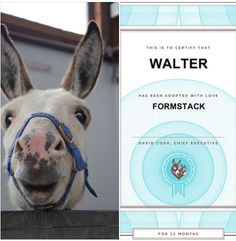Meet Walter, the Formstack donkey! We decided to adopt him from The Donkey Sanctuary for 12 months. His duties will include all things forms, lead gen, ping pong, and just generally looking cute.   You can check him out on our About page here: https://www.formstack.com/about