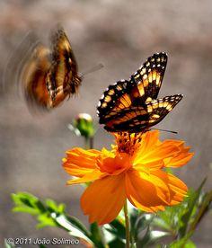 Efeito Borboleta, The Butterfly Effect