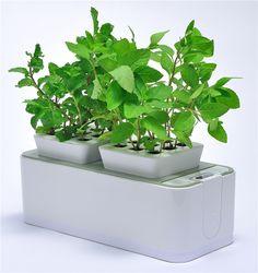 Zwei Cubes, in denen jede Menge Wachstumspotenzial steckt: Lieblingsgrün einpflanzen und alles entwickelt sich bestens – und von ganz allein.    Bald wieder erhältlich auf www.green-you.de!  #gardenactivist #vegancommunity #gardener #nogmo #gardening #kidsgarden #urbangardenersrepublic #organic #garden #nextgeneration #growfoodnotlawns #growfood #raisedbeds #organicgardening #growyourown #growyourownfood #greens #allotment #homegarden #vegetablegarden #greenthumb #kitchengarden #foodnotlawns