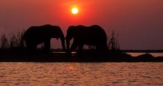 Elephants at sunset, Kariba - Google Search