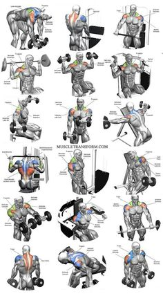 Workout Exercise Shoulder workouts to target specific muscle. - The Ultimate Shoulder Workouts Anatomy. We've put together this graphic of different types shoulder workouts. Knowing the anatomy of each muscle group is Fitness Workouts, Weight Training Workouts, Gym Workout Tips, Biceps Workout, Fitness Tips, Fitness Motivation, Sport Motivation, Deltoid Workout, Traps Workout