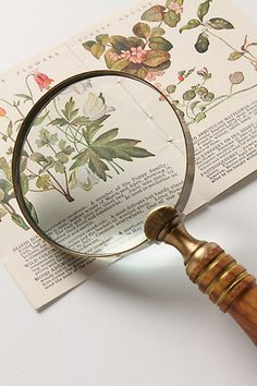 Magnifying Glass. Why not?