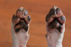 """homemade-dog-paw-wax Homesteading  - The Homestead Survival .Com     """"Please Share This Pin"""""""