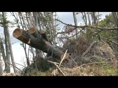 Журналістське  розстеження: на Закарпатті триває незаконна вирубка лісу. Частина 2 (ВІДЕО, ФОТО) - http://mukachevo.today/zhurnalistske-rozstezhennya-na-zakarpatti-trivaye-nezakonna-virubka-lisu-chastina-2-video-foto/