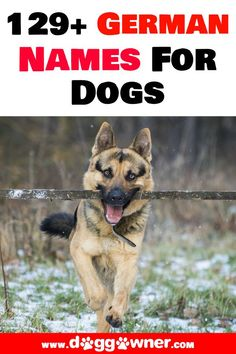 Did you just get a German dog breed?Then it is time to get them a German Name for Dogs that connects them to their heritage. #germandognames #dognames