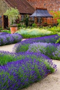 Lavender & Yarrow with Decomposed granite paths