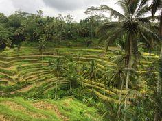 Bali Paradise   Storytelling Travellers