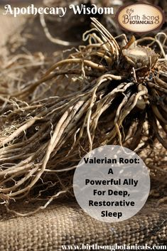 Stream Valerian Root: A Powerful Ally For Deep Restorative Sleep by Birth Song Botanicals from desktop or your mobile device Allergy Remedies, Eczema Remedies, Natural Remedies, What Is Valerian Root, Herbs For Sleep, Herbs For Anxiety, Birth Art