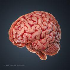 Human Anatomy Art, Brain Anatomy, Medical Anatomy, Anatomy Organs, Brain Models, 3d Models, Brain Pictures, Brain Painting, Brain Illustration