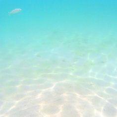 【n_moviegirlny】さんのInstagramをピンしています。 《ボラカイのビーチは浅いとこでも魚が居たよもっと深いとこまで行こうとして潮に流されて溺れかけてヒヨって行けなかったインスタでシュノーケルだけで深く潜ってる人達はマジで凄い!あーもっと綺麗な海と自然とパーティがある島に行きたい . . #ボラカイ#ビーチ#海#フィリピン#天国#魚天国#綺麗なビーチ#はよ行きたい#イビザにも行きたい#毎日SPIの勉強#気が狂う#boracaybeach#boracay#fish#beautifulbeach#beautifulsea#paradise#beach#philippines#love#relax#view》