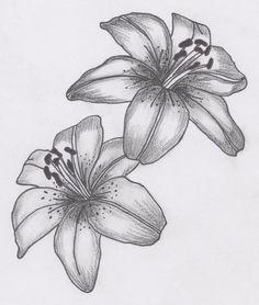 809fd85b85f2269de5fef2d9590cb7c1--lily-flower-tattoos-lilies-tattoo.jpg (736×867)