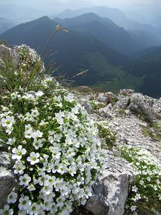 Mountain flowers in Malá Fatra National Park, Slovakia (by IwanR). Mother Earth, Mother Nature, Saint Marin, Beautiful World, Beautiful Places, Central Europe, Bratislava, Luxembourg, Eastern Europe