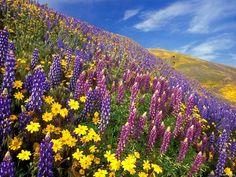 fond-ecran-nature-paysages-fleurs-champs-023.jpg (Image JPEG, 1600×1200 pixels) - Redimensionnée (59%)