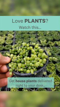 Succulent Favors, Succulent Care, Large Indoor Plants, Air Plants, House Plants Decor, Plant Decor, Succulents Garden, Garden Plants, House Plant Delivery