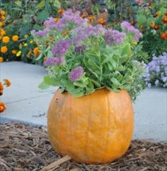 Five Easy Fall Container Ideas (love the pumpkin!)