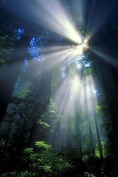renamonkalou:   Sunlight Filtering Through Dense Forest   ©Don Hammond