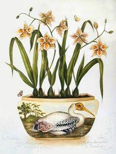 Kelly Higgs (b.1978) — Pelican (564×750)