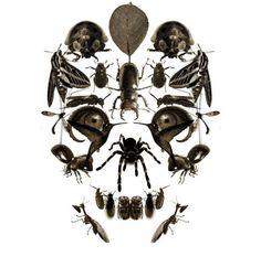 skull made of bugs