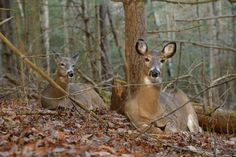 How to Tell a Buck Bed from a Doe Bed | Field & Stream #huntingtips